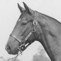 Spectacular Bid as a yearling