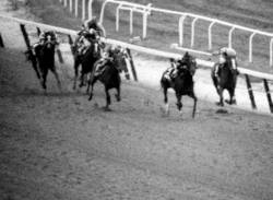 Coastal passes Spectacular Bid in the Belmont Stakes
